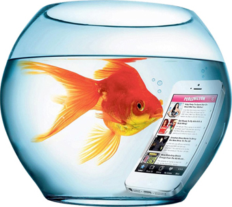Smart Fish in Fish bowl